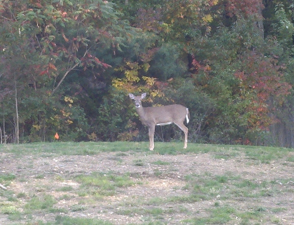 One deer outside of treatment room window