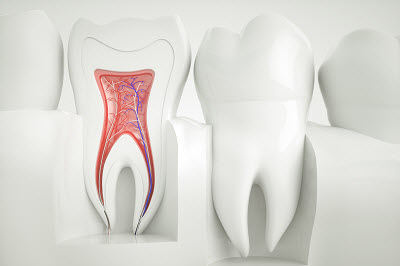 3D render of tooth anatomy