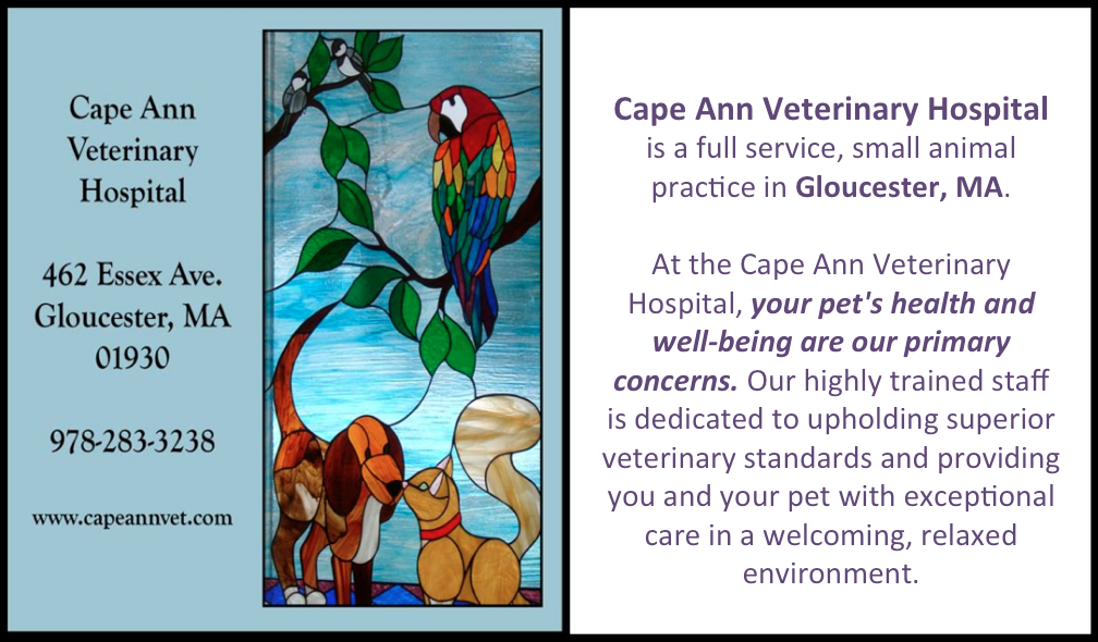 Gloucester Ma Veterinary Office Cape Ann Veterinary Hospital